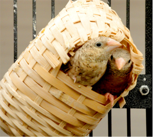 Mason_Birds