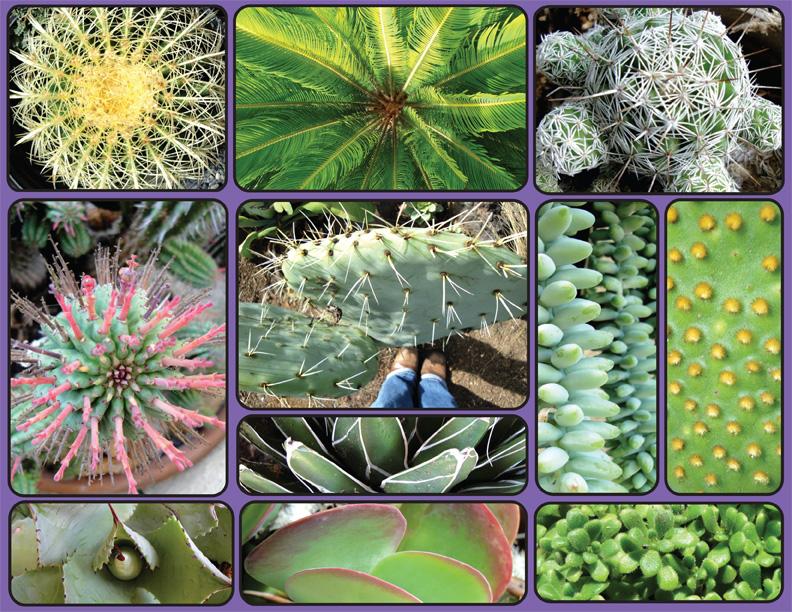 Mason_Cactus_Texture